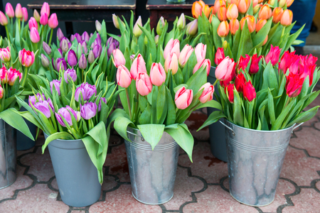 tulip: Beautiful spring flowers tulips in the buckets on city street Stock Photo