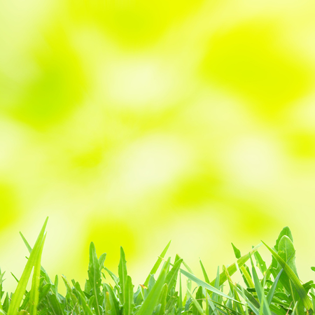yellow green: Green and yellow abstract light spots can be used for background