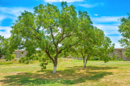 blue green background: Green park with trees and blue sky on background Stock Photo