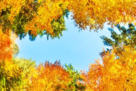 Fallen Sie in den Wald mit orange bunten Bäumen. Blick auf den blauen Himmel