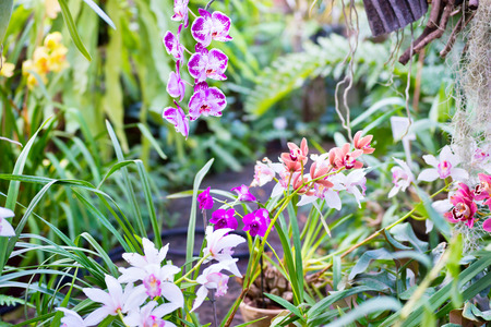 thai orchid: Many different orchids in tropical garden. Beautiful spring flowers with soft green background