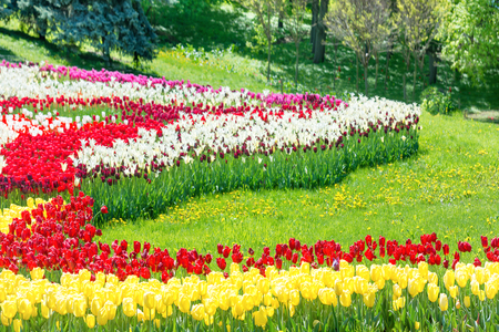 fields of flowers: Garden with colorful tulips and green grass in the park