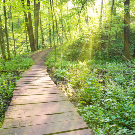 forest trees: Bridge in the sunny green forest with trees