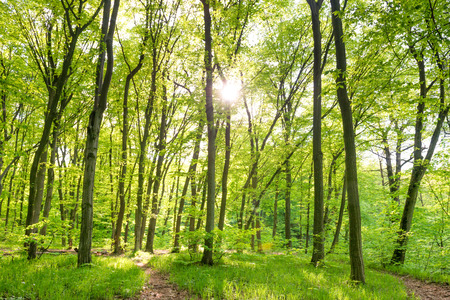 Morning in sunny forest with green trees Stock Photo