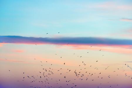 cielo con nubes: Bandada de pájaros en el cielo colorido atardecer Foto de archivo