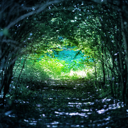 shining through: Magical blue forest with path to the light through dark tunnel of trees Stock Photo