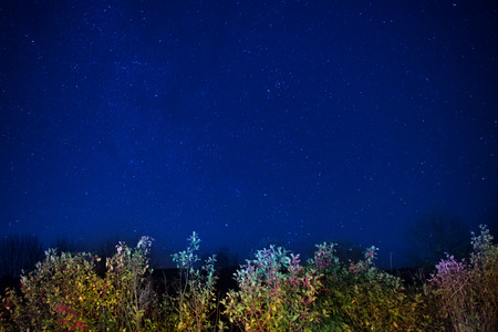 Autumn forest under blue dark night sky with many stars. Space background