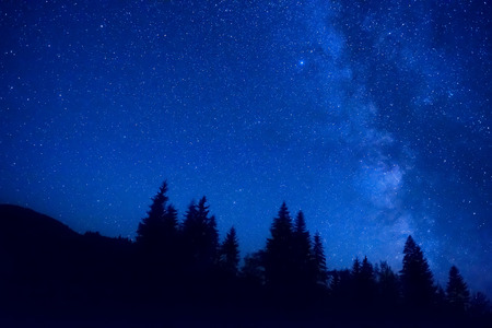 stars night: Forest at night with pine trees under dark blue sky with many stars