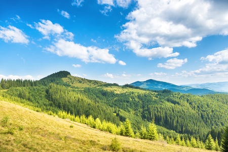 blue green landscape: Green sunny hills with forest, blue sky and clouds. Nature landscape Stock Photo