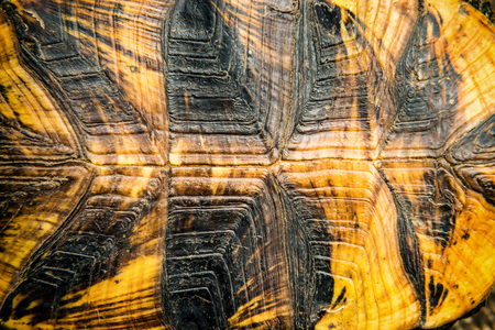 beautiful rare: Texture of turtle shell can be used for natural background Stock Photo