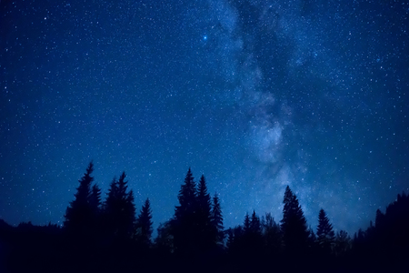 Forest at night with pine trees under dark blue sky with many stars