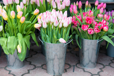 white flowers: Beautiful spring flowers tulips in the buckets on city street Stock Photo