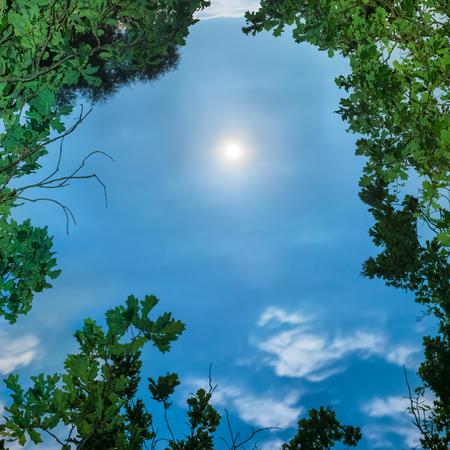 Lune à travers les feuilles des arbres la nuit à ciel sombre clair