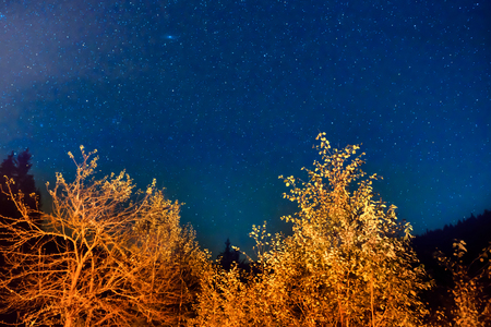 Dark blue night sky above the mystery autumn forest with orange trees Stock Photo