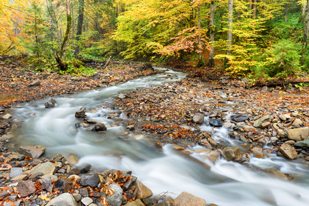 Autumn forest with colorful fallen trees and streaming river