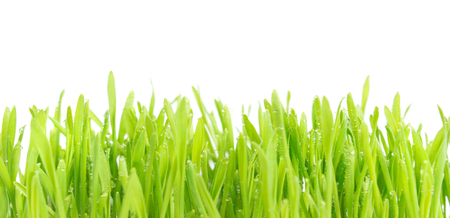 Green wet grass with water drops isolated on white background