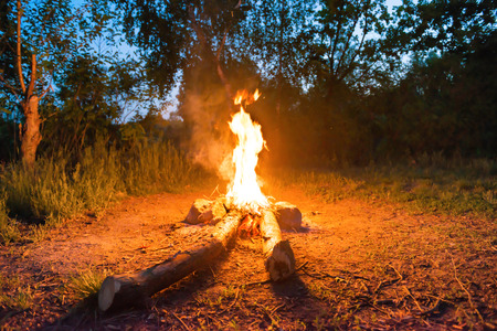 Bonfire near water in forest at night Stockfoto
