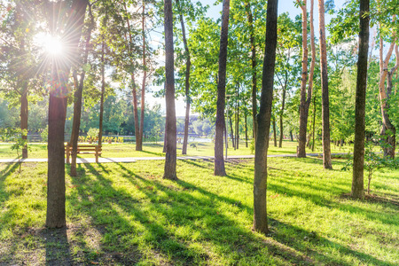 Wooden bench in beautiful green sunny park Stockfoto