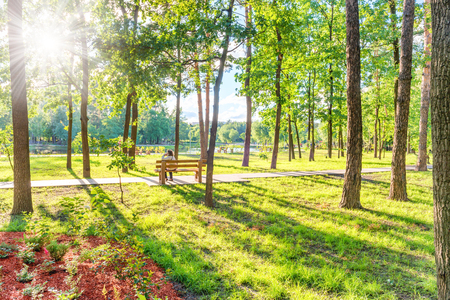 Senior woman sitting on wooden bench in beautiful green sunny park