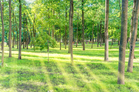 Beautiful sunny park with light beam at green grass