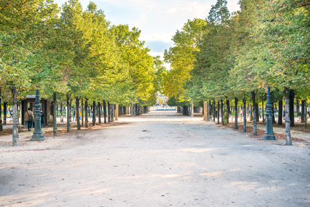 Alley with green trees in Tuileries garden in Paris, France