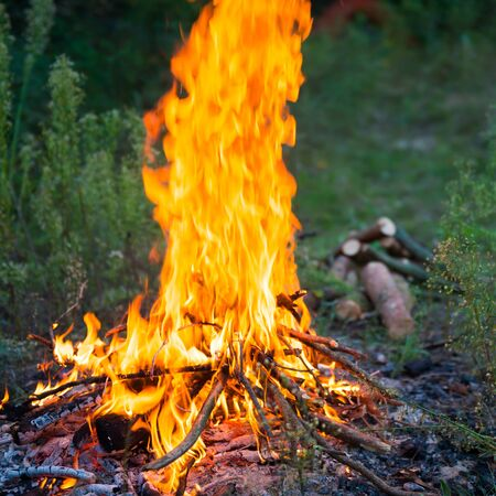 Bonfire in the forest with big fire flame Stockfoto