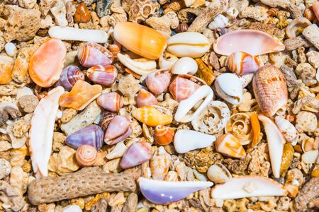 Closeup view of many colorful sea shells at coral beach. Can be used as nature summer background