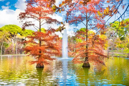 Fountain in a lake in city park among old bald cypress trees (taxodium distichum)