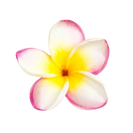 One pink tropical frangipani flower isolated at white background Stockfoto