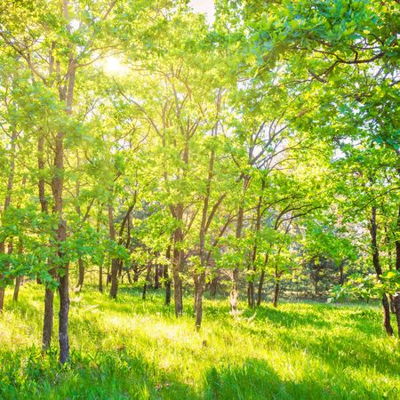 Landscape with green forest and beautiful nature