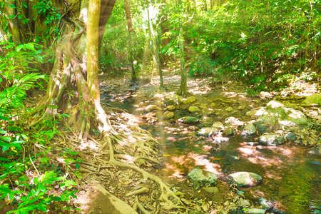 Green jungle forest nature landscape with river and big tropical trees