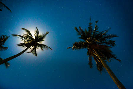 Palm trees under dark blue night sky with full moon and many stars