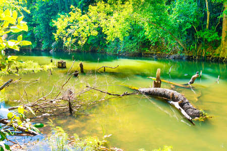 Forest green jungle river landscape with tree log