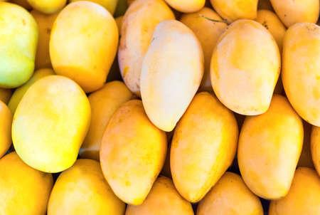 Yellow mango, many mangos on fruit market 版權商用圖片
