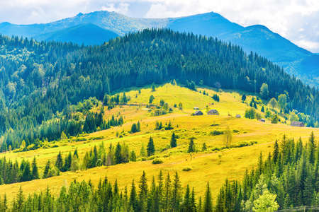 Sunny meadow with small rural houses and forest on blue mountain