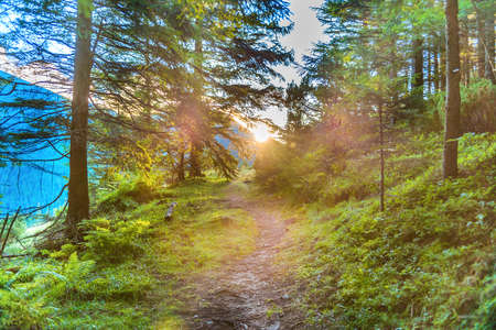 Path in green pine forest and mountains with shining sunset sun rays