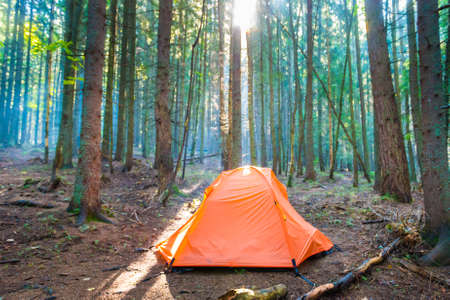 Orange tent in green pine forest with sunset sun and sun rays through trees