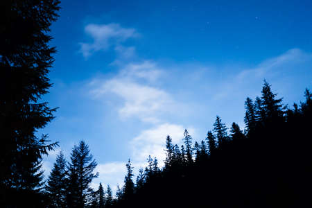 Forest and pine trees landscape under blue dark night sky with many stars, milky way cosmos background 版權商用圖片