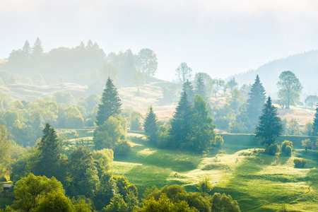 Nature landscape of pasture country hills with fog mist on green trees 版權商用圖片