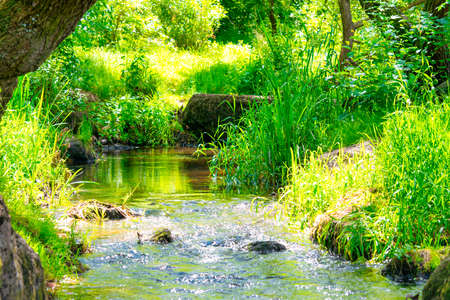 Stream in the tropical forest. Environment sunny landscape