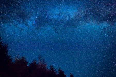 Forest and pine trees landscape under blue dark night sky with many stars, milky way cosmos background