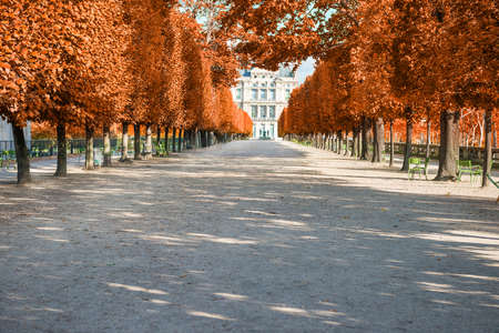 Park alley with red autumn trees in Tuileries garden in Paris, France