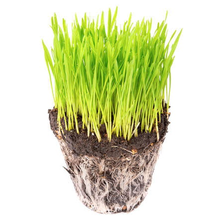 Green grass and soil from a pot with plant roots isolated on white background Reklamní fotografie