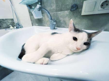 Funny white domestic cat in bathtub sink