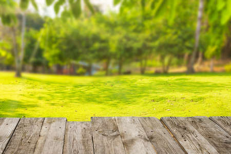 Spring summer landscape with green grass field lawn, trees at sunny day, view from wooden board
