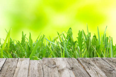 Green grass on wooden board and yellow spring abstract blur background