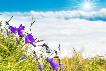 Blue flowers bluebells with green grass above white clouds and sun Banque d'images