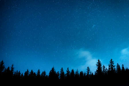 Forest and pine trees landscape under blue dark night sky with many stars, milky way cosmos background Banque d'images