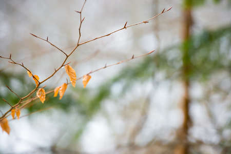 Branch with dry red leaves over soft background. Spring concept Banque d'images