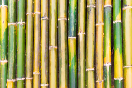 Green bamboo stem wood texture, can be used as oriental or nature background